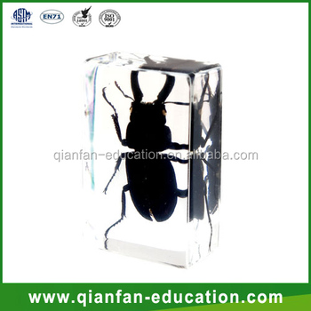 Stag Beetle resin crafts materials acrylic paperweight