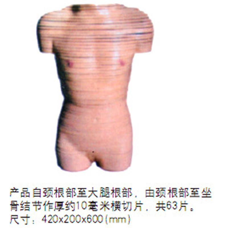 Mejor Precio Anatomía Formación Humano Cuerpo Humano Femenino Corte ...