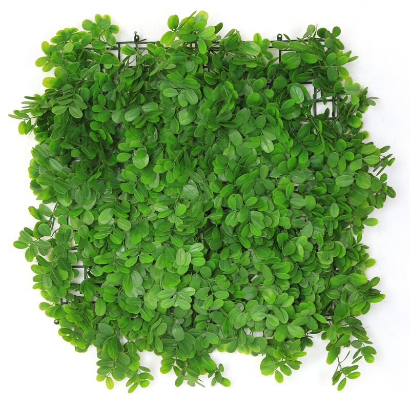 Grossiste Plante Verte Pas Cher Acheter Les Meilleurs Plante