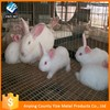 Female and male building rabbit cages for stallions