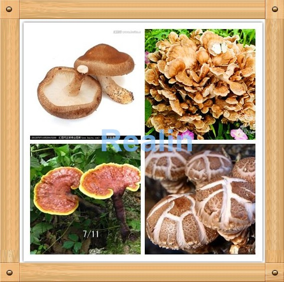 Anti-fatigue Improve Memory L-Theanine Powder Food Supplement