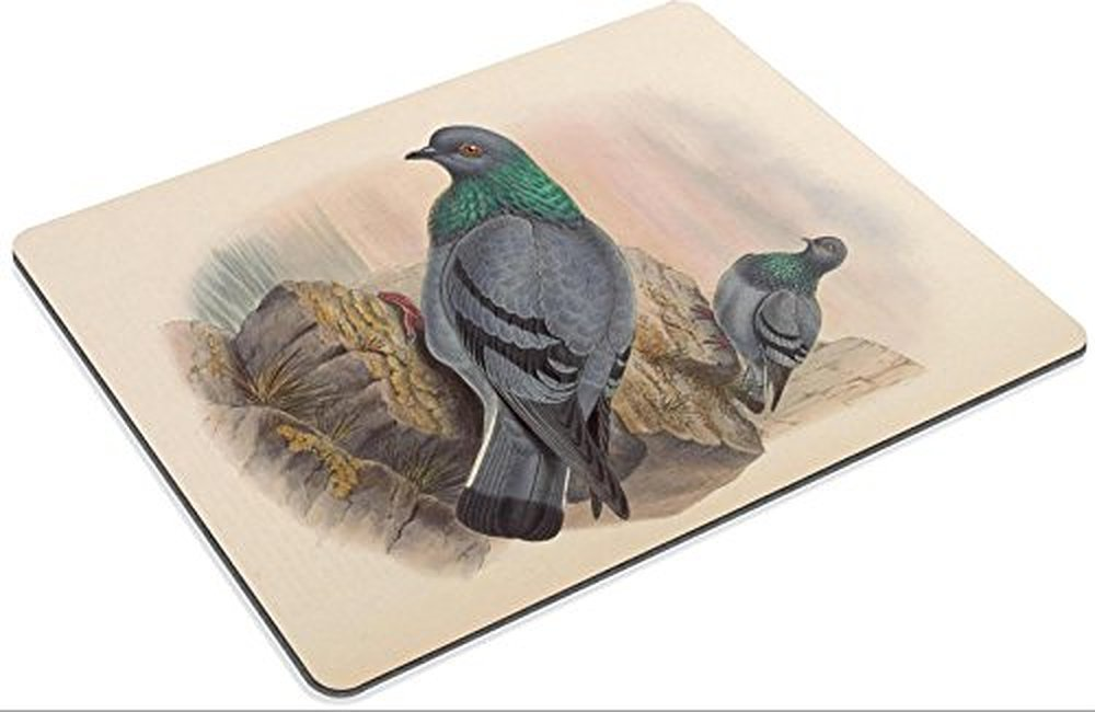 "/""Rufous-breasted Spilornis/"" John Gould Birds of Asia, 1883 — Fine Art Print"
