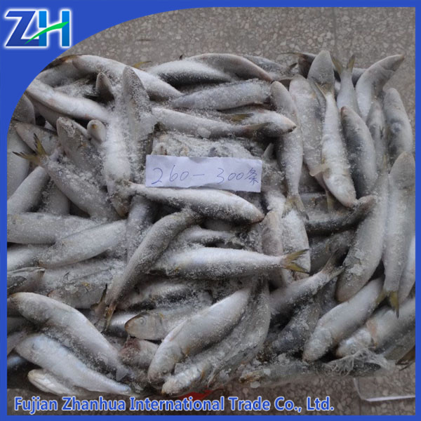 Frozen sardines fish different type best canned sardines