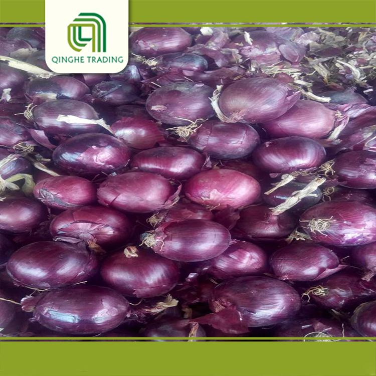 hot selling different types of fresh red onion with good quality