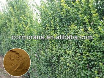 Bulk Supply Hedera Helix Extract,Ivy Extract /ivy Leaf Extract,3%~15%  Hederagenin - Buy Hedera Helix Extract,Hedera Helix Extract Powder,Hedera  Helix