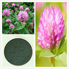 Pure Natural Red Clover Extract powder cas 977150-97-2 Isoflavone 40%