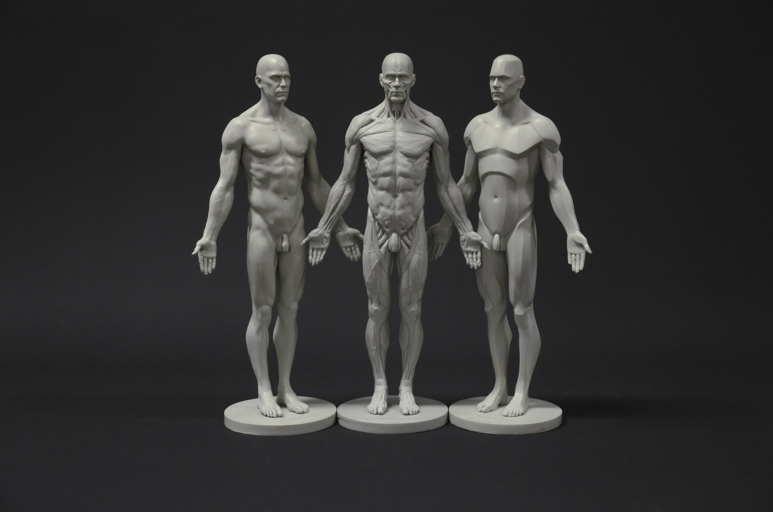 Buy Male Anatomy Figure Collection: Planar, Ecorche and Skin ...