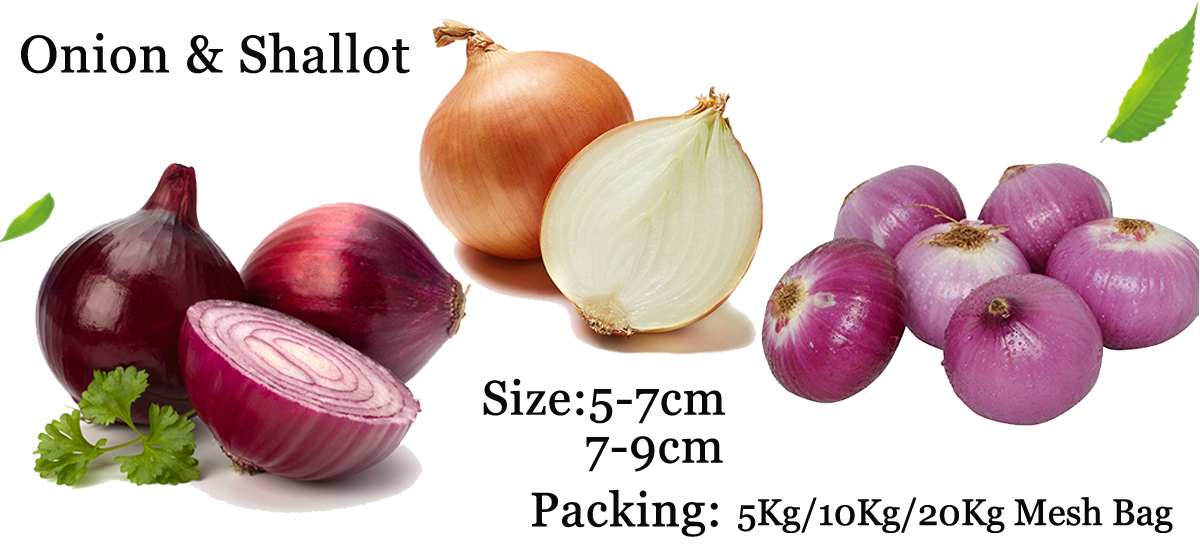 Fresh Chinese Red Shallot Small Onion 3-4cm