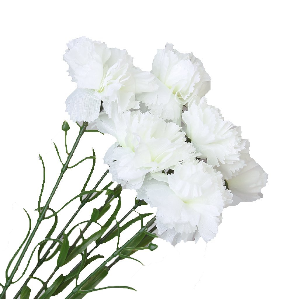 Cheap Carnation Wholesale Flowers Find Carnation Wholesale Flowers
