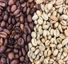 Organic Catimor Typica Arabica Robusta Green Coffee Bean from Yunnan of China