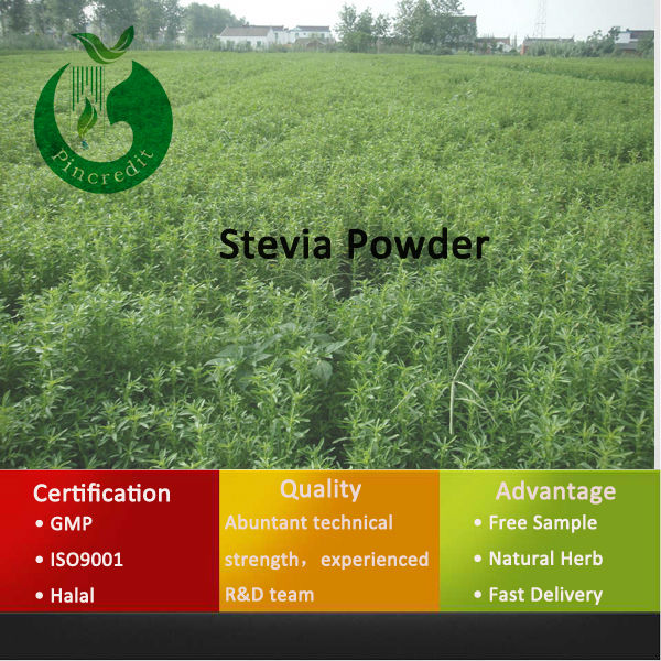 Stevia Sugar/Stevia Leaf Extract/Stevia Powder