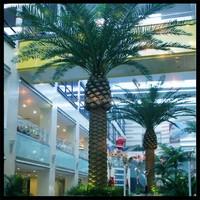 SJM14082877 Decoration Garden Artificial Tree Plastic Date Palm Tree for sale