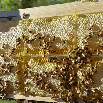 Beehive100 N Atural Bee Hive
