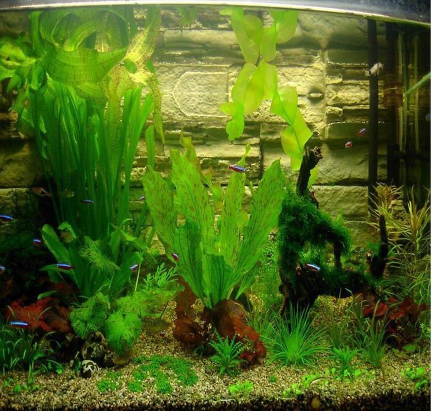 Factory Direct selling 500pcs aquarium grass seeds (mix) water aquatic plant seeds (8 kinds ...