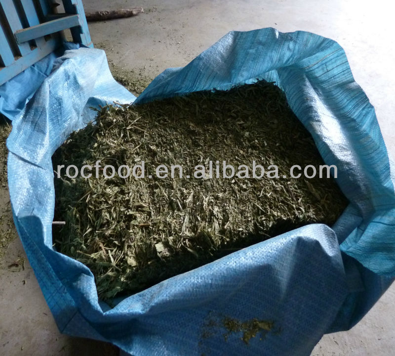 dried Stevia Leaf dry for extraction