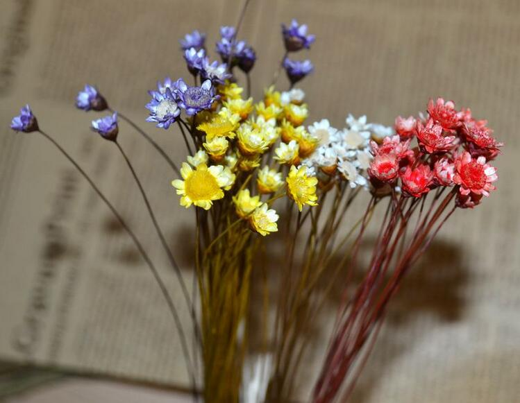 Multi-Colored ColorSeason Wedding Nature Dried Happy Flowers