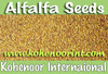 High Quality Alfalfa Seed at Best Price