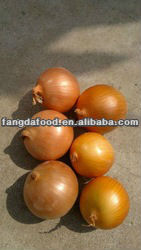 selling chinese yellow onion specification fresh