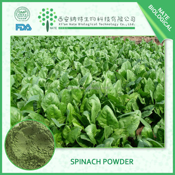 HOT selling Spinach Juice Powder High Quality Spinach extract Powder