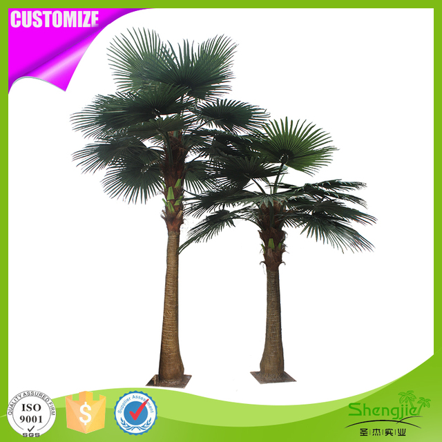 Buy Cheap China indoor palm tree plants Products, Find China indoor ...