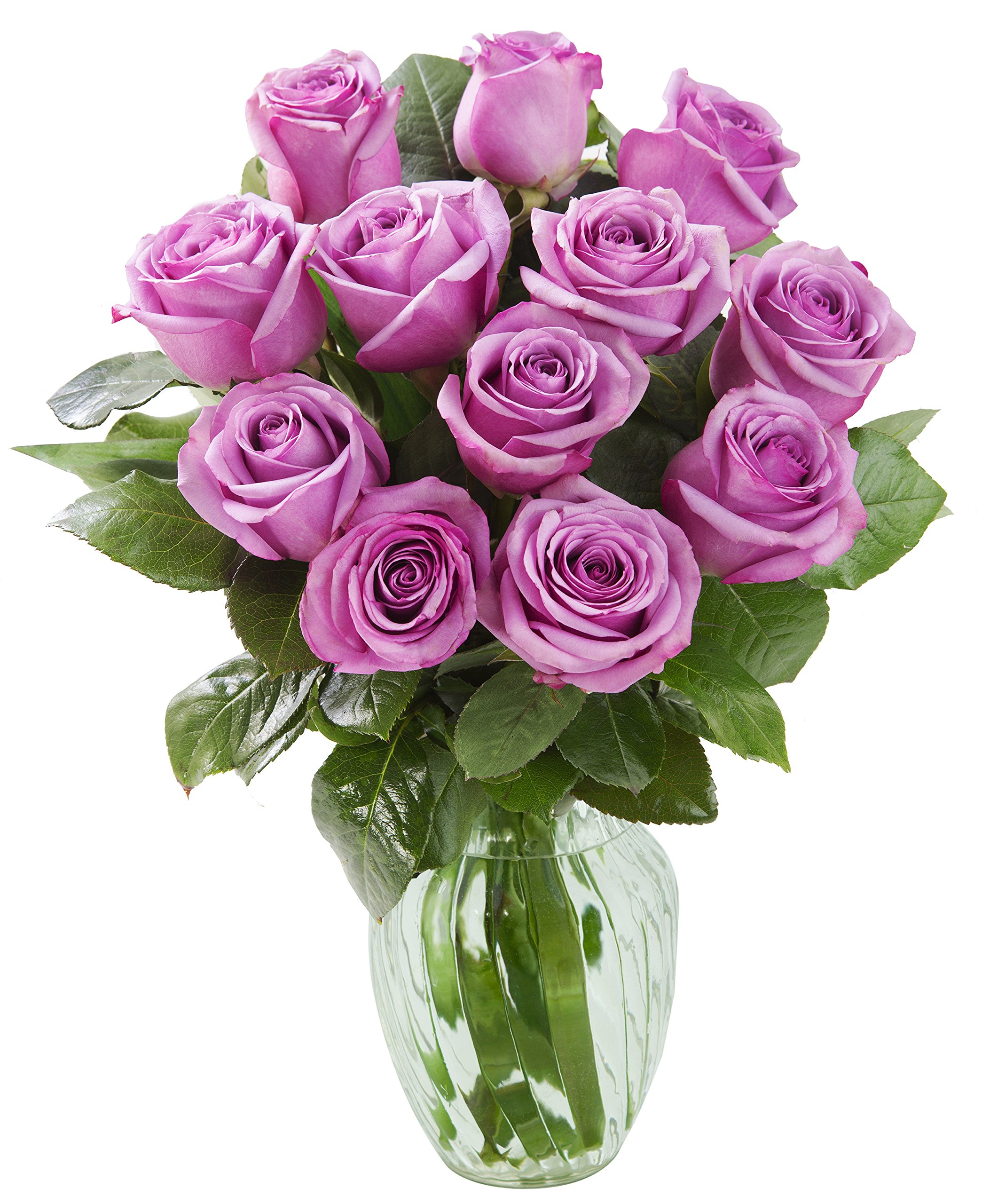 Cheap Beautiful Fresh Roses Find Beautiful Fresh Roses Deals On