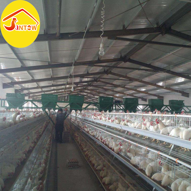 Easy Install Cheap egg laying chicken cages for chicken coop