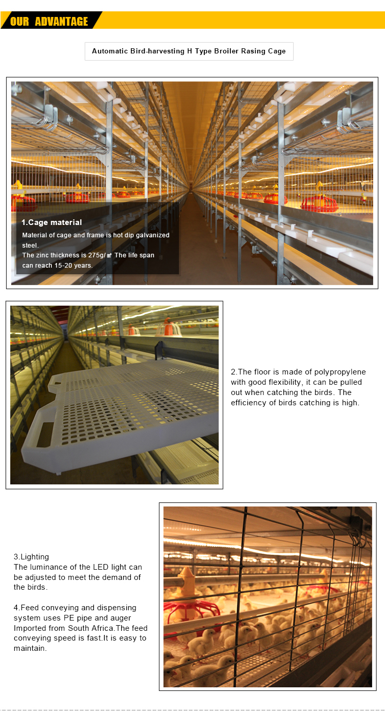 Poultry farm house design broiler chicken cage system for chicken shed with automatic feeding drinker