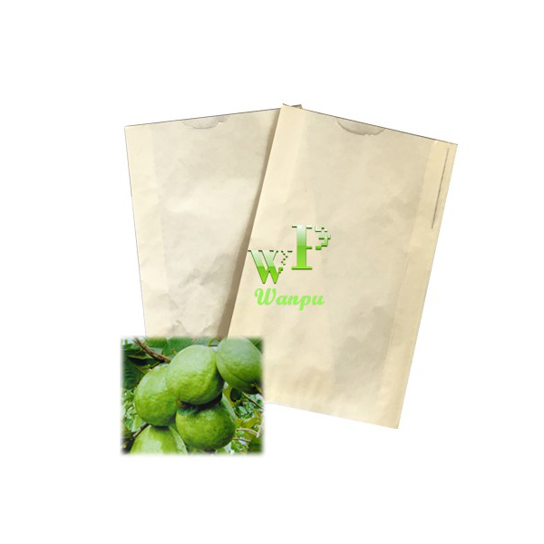guava bag supplier, fresh guava growing protection tree paper bag