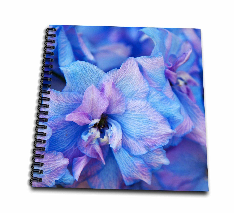 Danita Delimont - Flowers - Hydrangea flowers, Sequim, Washington, USA - US48 TEG0421 - Terry Eggers - Memory Book 12 x 12 inch (db_148723_2)