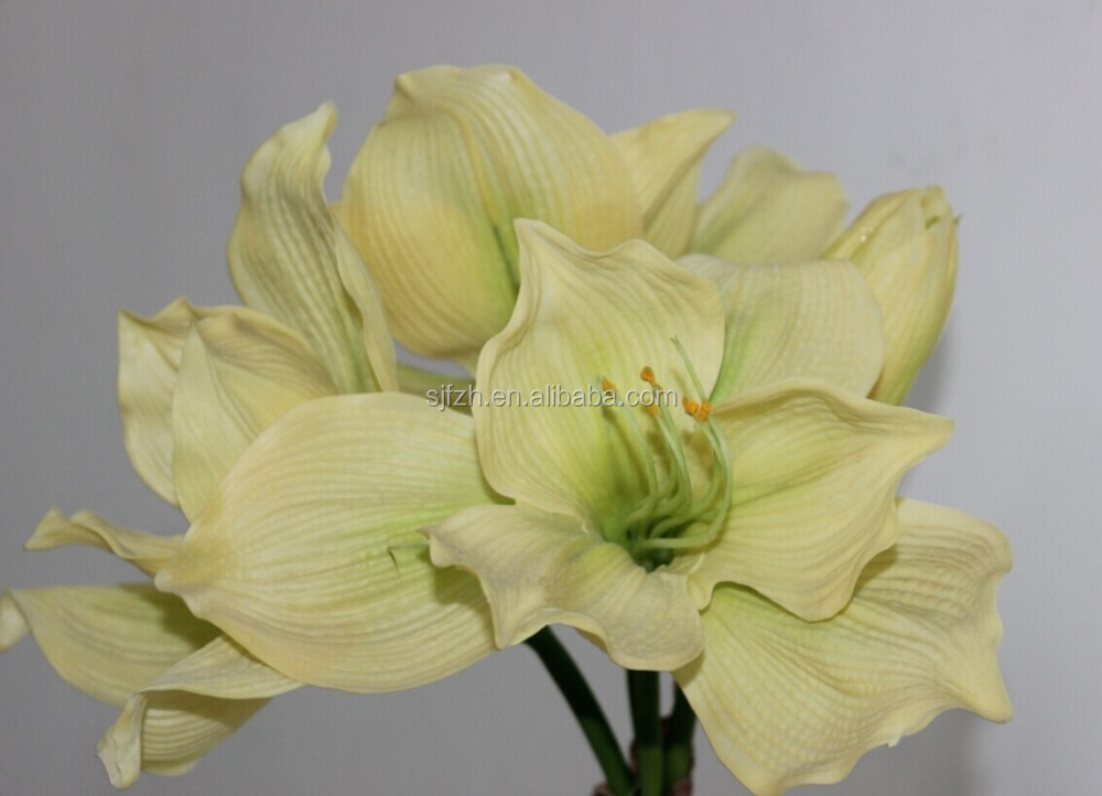 Amaryllis sale amaryllis sale suppliers and manufacturers at amaryllis sale amaryllis sale suppliers and manufacturers at alibaba junglespirit Images