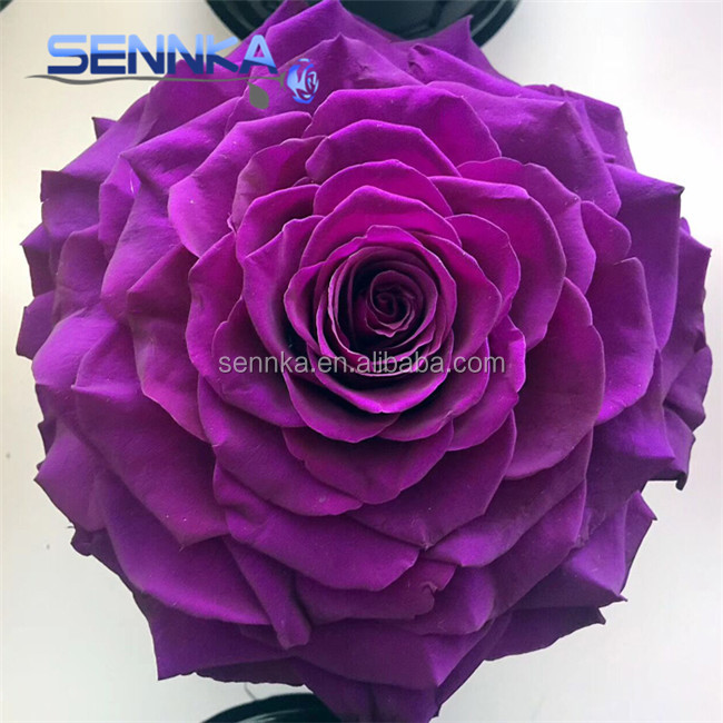 Best Seller Dutch Preserved Flowers Big Rose Head Wholesale Prices