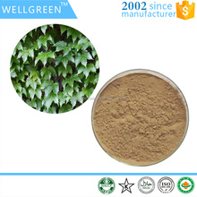 GMP certificated supplier Ivy Leaf Extract/Total Saponins 10% HPLC