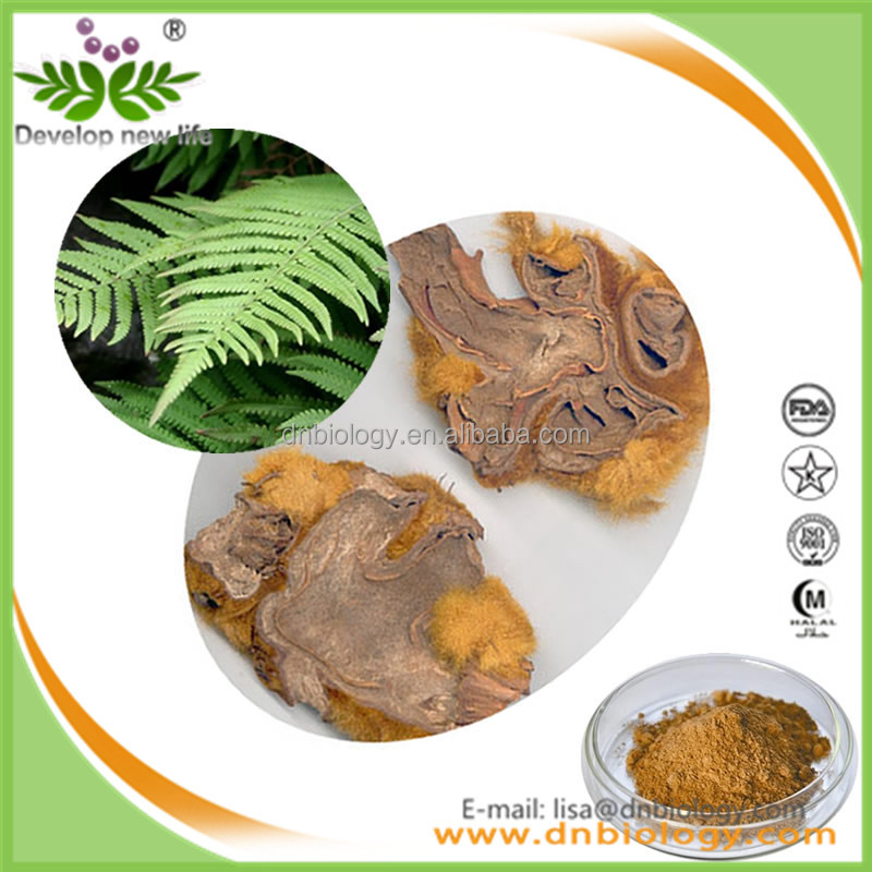 Professional supply Herbal Extract /Rhizoma Cibotii Extract/Cibotium barometz(L.)J.Sm