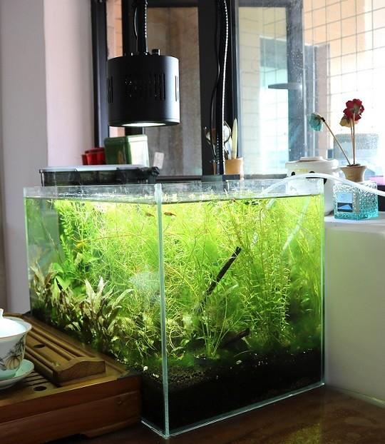 Wireless Dimmable Sunset Sunrise 90w Led Aquarium Light: Dimmable Diy Led Aquarium Lighting Planted Tank