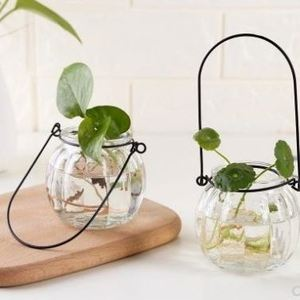 Amazon hot sale Green Plant Vase Multi-Purpose Transparent Glass Hydroponic Container wholesale clear Glass Flower Pots
