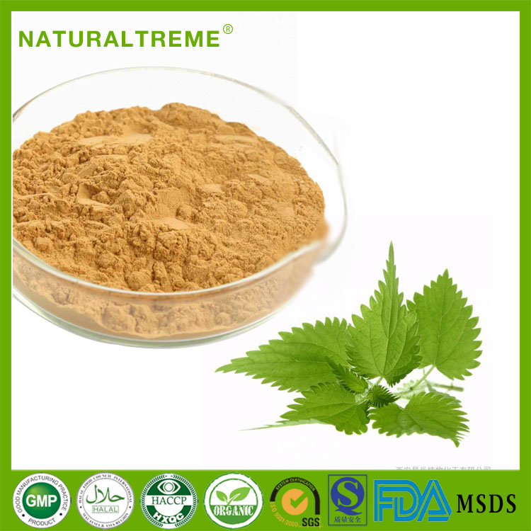 GMP Certificate yellow brown nettle leaf in herbal extract fine powder