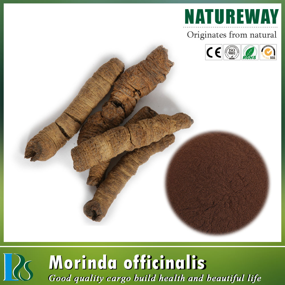 Healthy Plant Extract factory supply radix morindae officinalis root ext