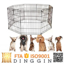 A group of dogs play dog fence