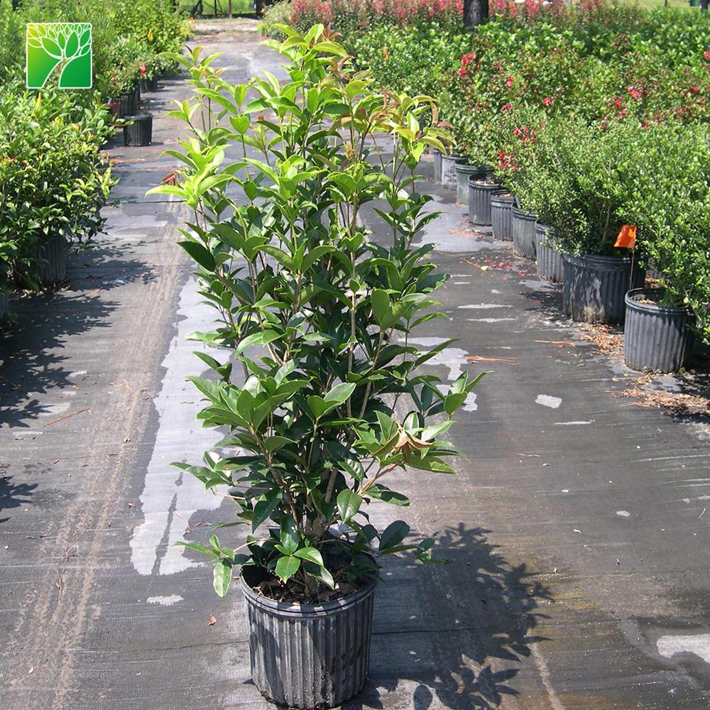 China Plants Nursery China Wholesale Alibaba