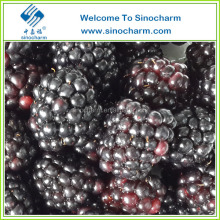 New Crop IQF Fresh Blackberry Fruit From China