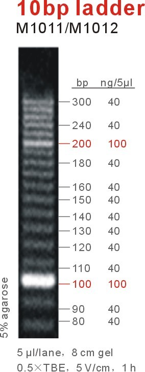 10bp DNA Ladder