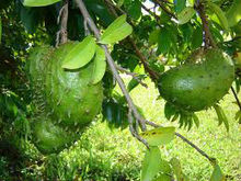 Guyabano/ Soursop fresh fruit