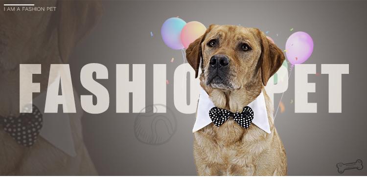 New Cat Dog Pet Harness Leash Chumbo Ajustável Colorido Colar