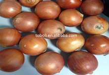 Liliaceous Vegetables Product Type Common Cultivation Type Dutch onions