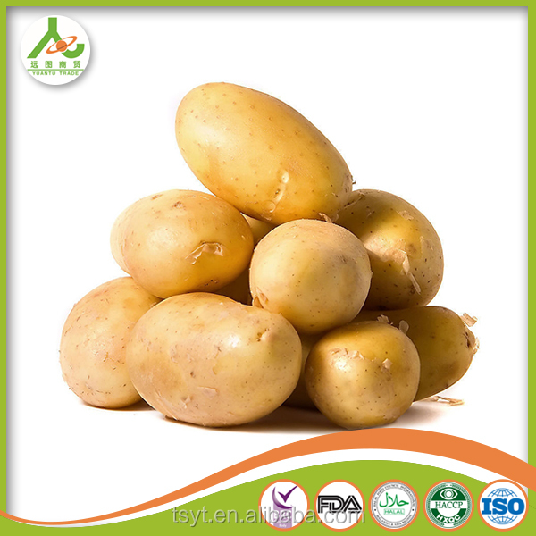 Fresh Potatoes interesting products from china