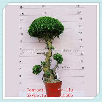 Lf090442 Decorative Artificial Boxwood Plants Preserved Topiary Fake Hedge