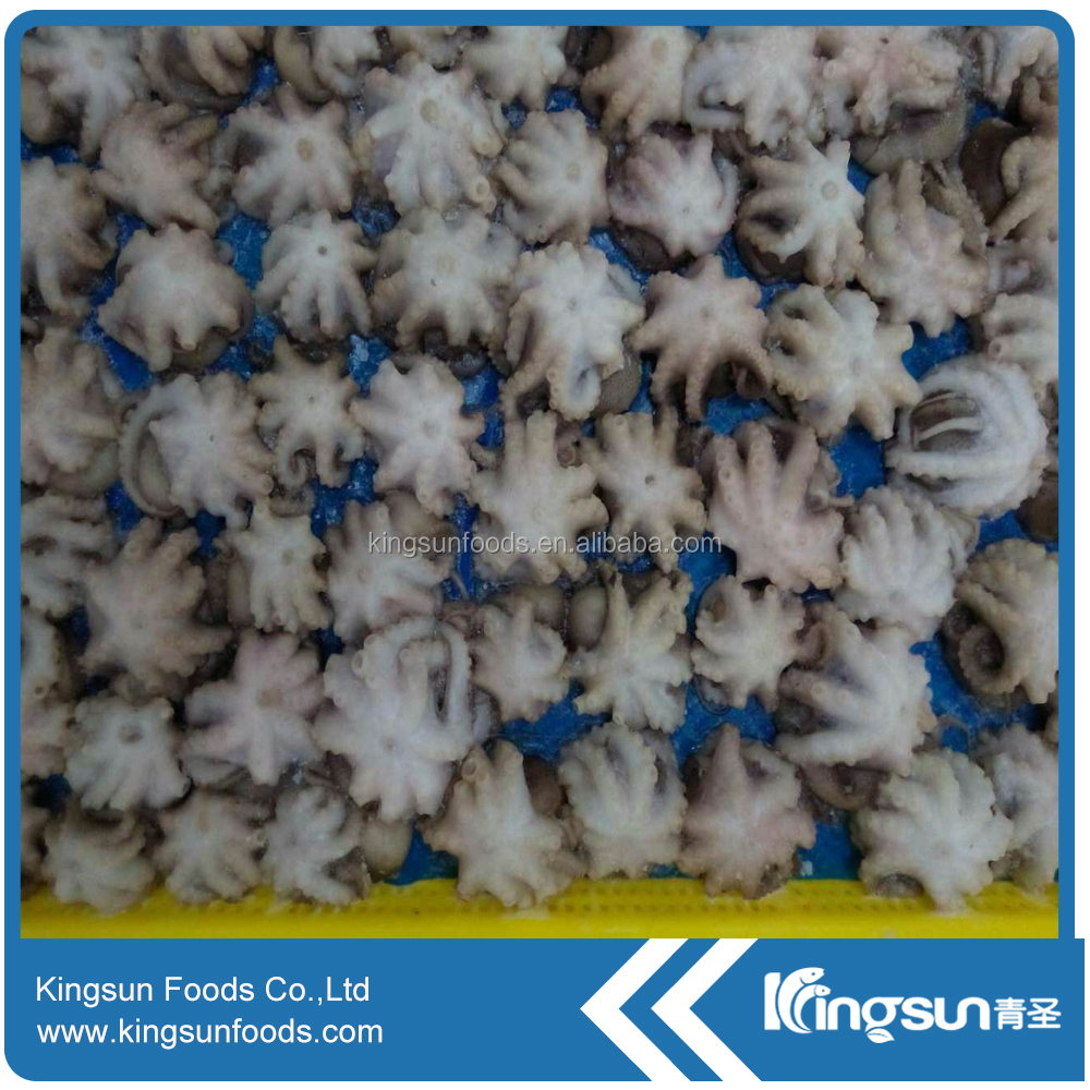 Good quality Frozen Baby Octopus for sale (Octopus Ocellated)
