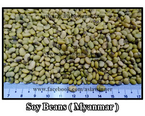 Bulk Soy Beans, Bulk Soy Beans Suppliers and Manufacturers