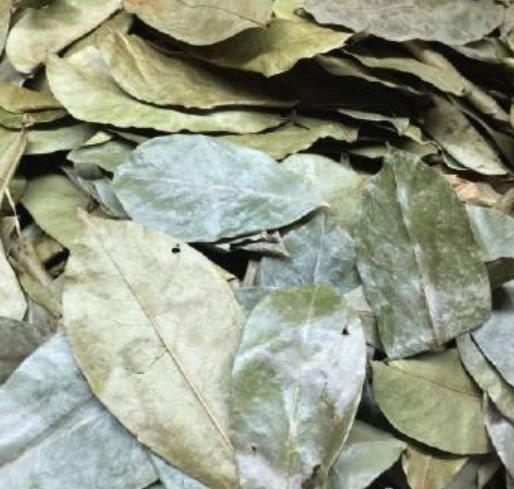 Anti cancer tea wild Dried Soursoup whole leaves tea - 4uTea | 4uTea.com
