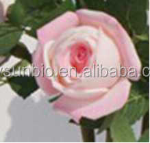 Real Touch Roses.real Preserved Roses